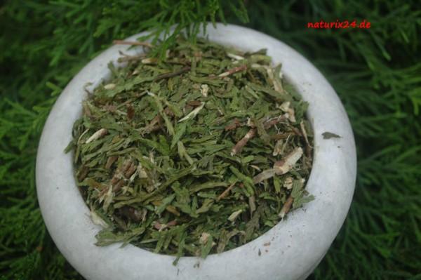 Thuja, Lebensbaum Triebspitzen geschnitten
