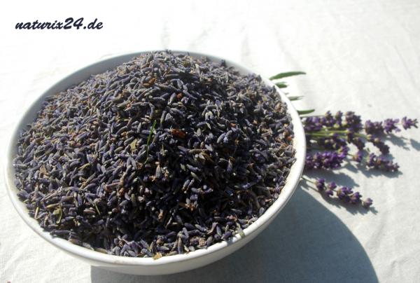 Lavendelblüten ganz `Mont Blanc´
