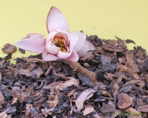 Seerosenblüten ganz