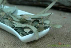 Eucalyptusblätter ganz