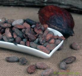 Kakaobohnen Ecuador ASS