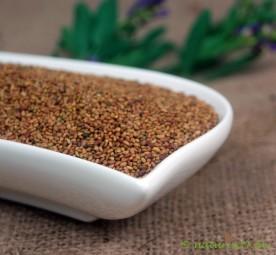 Alfalfa, Luzernesamen ganz