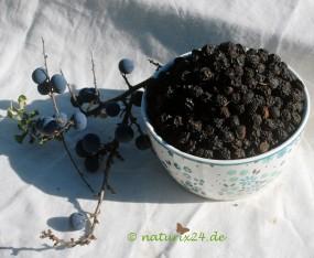 Schlehdornfrüchte ganz