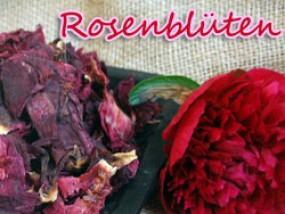 Die Farben der Rose